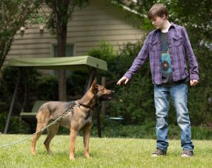 After his brother is killed in combat, Justin Wincott (Josh Wiggins) agrees to take ownership of his dog.  Photo courtesy of Warner Brothers